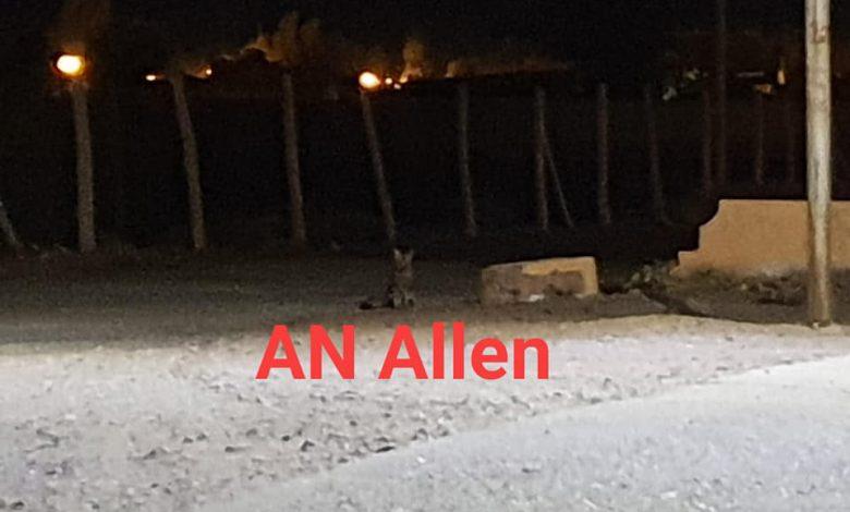 Photo of Un zorro se arrimó al super chino en medio de la cuarentena